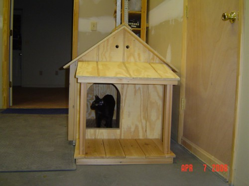 Family cat inspecting the dog house