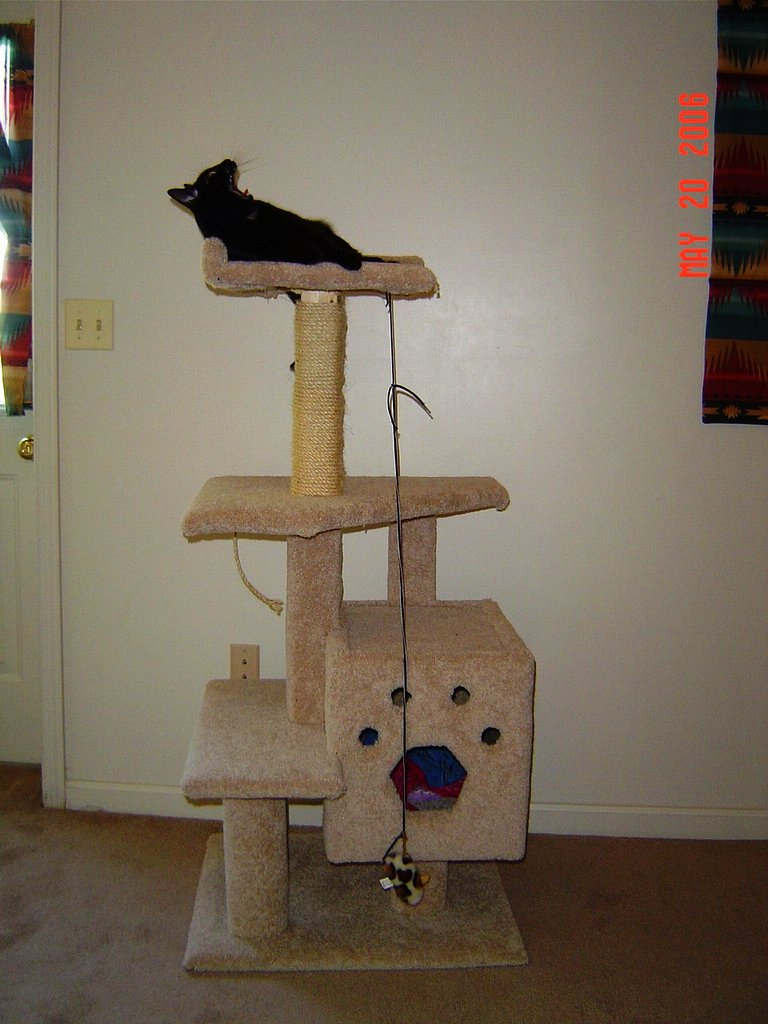 Sleepy cat lounging on cat tree