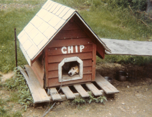 Chip the beagle louning in his well-worn doghouse