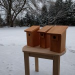 Trio of bluebird houses made from left-over cedar and cypress